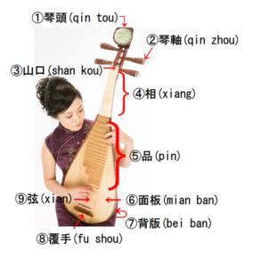 中国琵琶の構造の写真