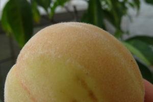 大久保桃の実
